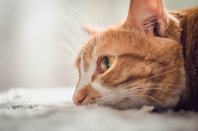 綺麗な目をした猫