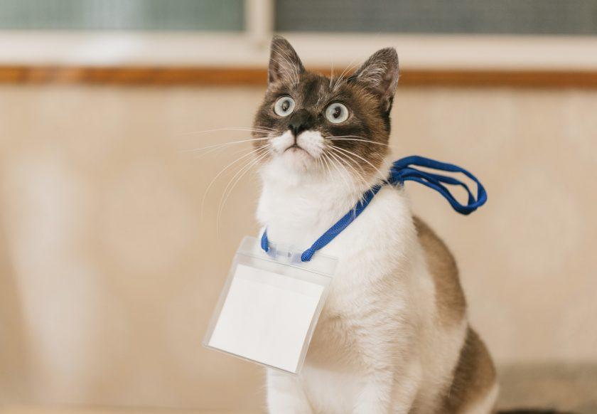 名札を付けたかわいい猫
